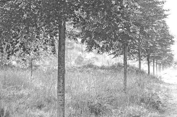 Bos van Maurice Konings