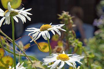 fröhliche Blumen von wil spijker