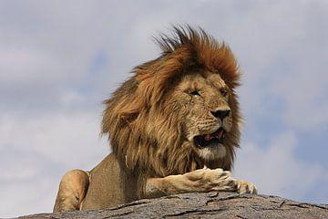Leeuw van Saskia Hoks
