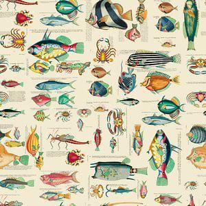 Kleurrijke vissen van Andrea Haase