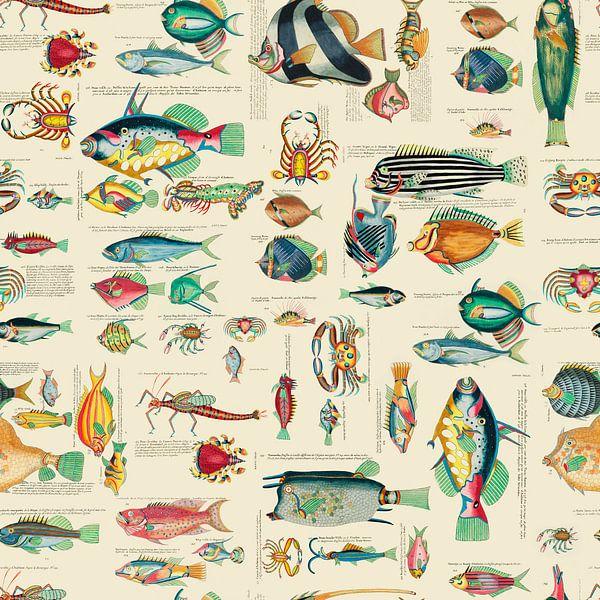 Farbenfrohe Fische von Andrea Haase