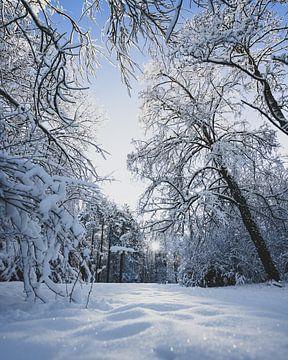 Zon door bomen in de sneeuw van Jonai