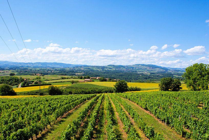Wijnvelden in de zon van BTF Fotografie