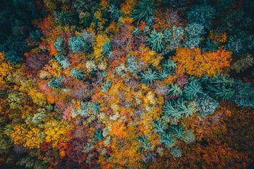 Luftaufnahme Wald mit Bäumen von Thilo Wagner