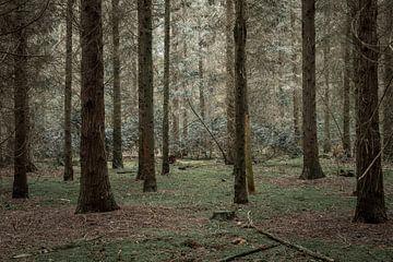Seeländischer Wald