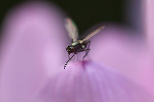Kleine vlieg op een bloemblad
