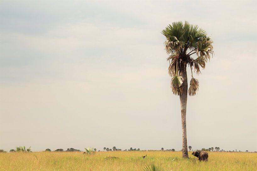 Büffel - von Marije Zwart