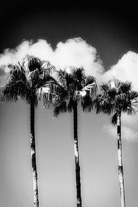 Miami Beach III van