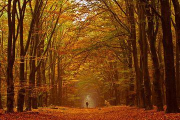 Walking von Niels Barto