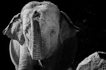 olifant zwart wit van Daphne Brouwer