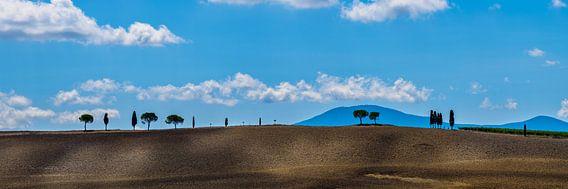 Bomenrij in Toscane, nabij San Quirico d'Orcia van Teun Ruijters