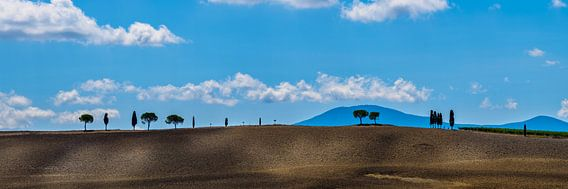 Bomenrij in Toscane, nabij San Quirico d'Orcia