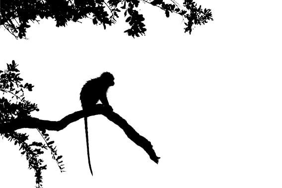 Silhouet van aap van Richard Guijt