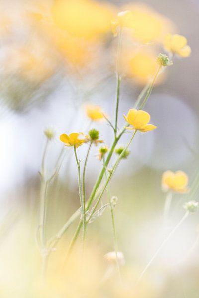The yellow glistens