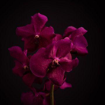 Fine art flower van Sabine Keijzer