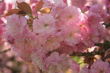 Baumblüten von Katja Bohn