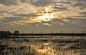 Texel Landschap 063 van Starworks Lien van der Star