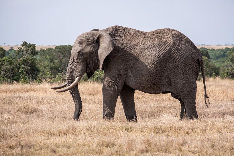 Olifant in Ol Pejeta Kenia von Andy Troy