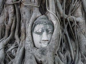 Buddha in boom