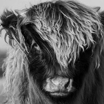Eines junges Schottischer Hochland kalb (schwarz und weiß) von Latifa - Natuurfotografie