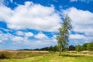 Landschaft am Bodden auf dem Fischland-Darß in Wieck von Rico Ködder