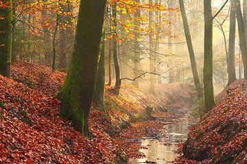 Sprookjes beekdal in een beukenbos in de herfst van Maarten Pietersma