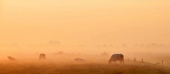 koeien in de ochtend nevel
