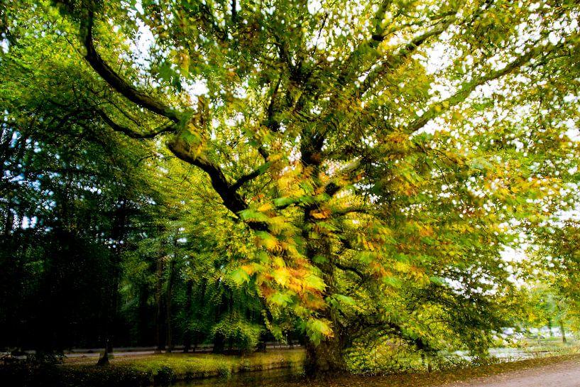 Tree von Louis Kreuk