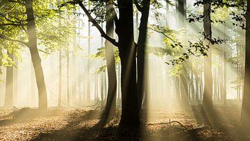 Sunrays von Theo Klos