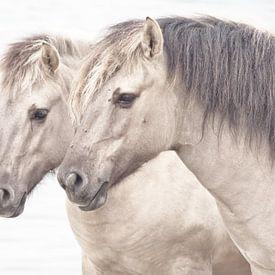 Paardenhoofdstel van Dick Vermeij