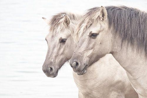 Paardenhoofdstel van
