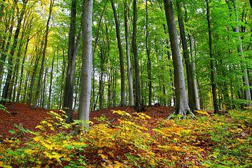 Herbstwald von Ostsee Bilder