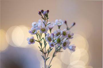 jolies fleurs sur Tania Perneel