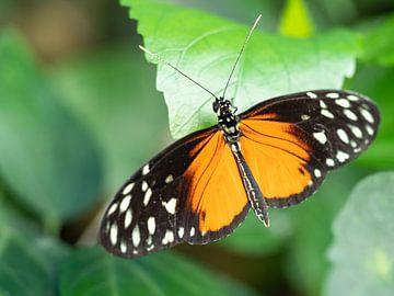Mooi gekleurde vlinder hangend aan een groen blad. van Mariëtte Plat