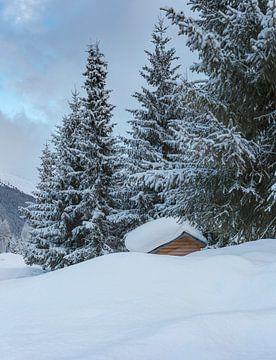 Besneeuwde bomen en een hut, Davos, Graubünden, Zwitserland van Rene van der Meer
