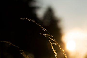Grassprietje von Bart Zwinkels