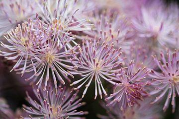 bloem met kleine bloemetjes von Klaase Fotografie