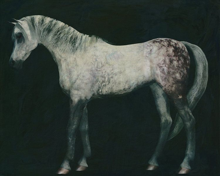 Arabisch paard rechtop van Jan Keteleer