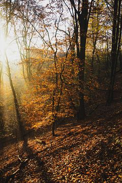 Nationaal Park Zuid-Kennemerland 003 van Gerhard Niezen Photography