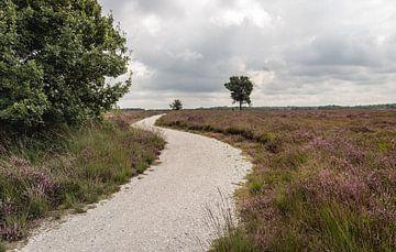 Chemin sinueux dans un paysage de landes