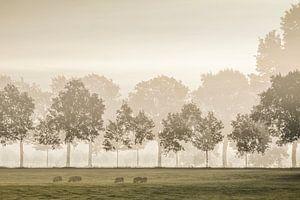 Hollands landschap meervoudig