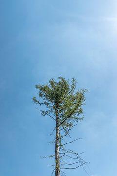 alleenstaande boom tegen een blauwe lucht van Patrick Verhoef