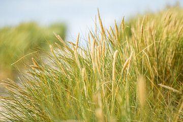 Helmgrassen in de wind van Nicole Nagtegaal