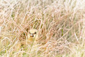 Kuiken verstopt in het gras