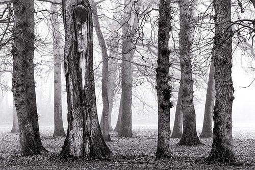 Berken in de mist von Jurjen Veerman