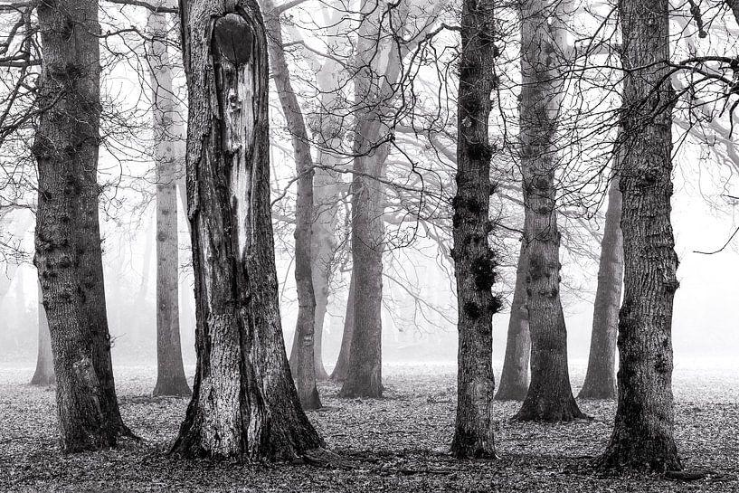 Berken in de mist van Jurjen Veerman
