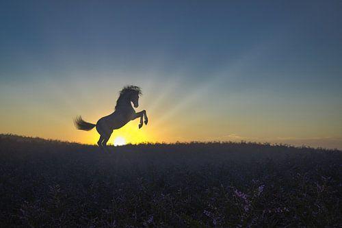 Aufsteigendes Pferd auf der Heide in der Morgendämmerung