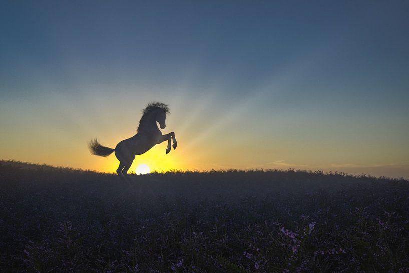 Stijgerend Paard op de Heide tijdens het Ochtendgloren van Arjen Roos
