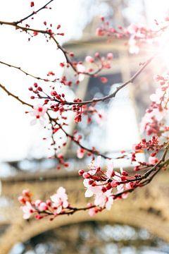 Bloesem in de lente bij de Eiffeltoren van Dennis van de Water