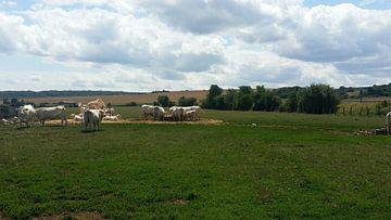 Frankrijk (2017), landschap in Verdun van Harm Bosma